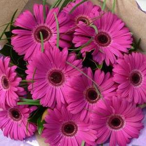 11 Лилави гербери - Онлайн магазин за цветя в саксия Magic Flowers