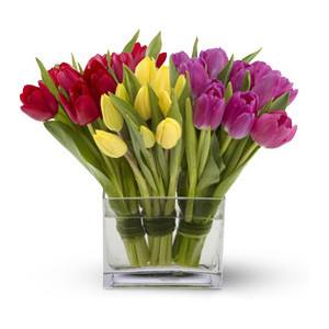 Букет 30 Лалета - Цветя в саксия Magic Flowers