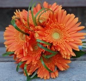 Букет от оранжеви гербери 11 броя - Магазин за цветя в саксия Magic Flowers