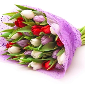 Tulip Madness букет - Доставка на саксийни цветя Magic Flowers