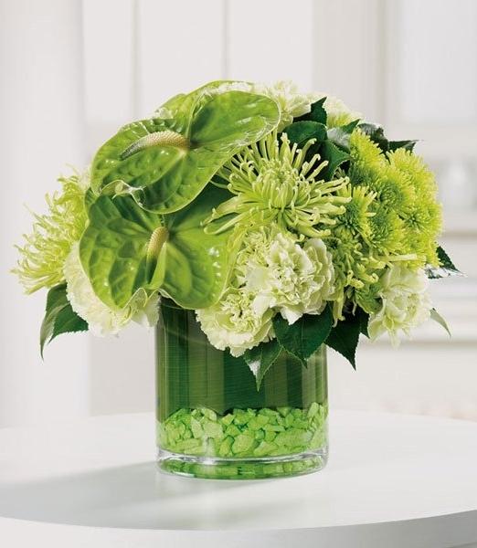 Зелена феерия - Доставка на саксийни цветя Варна Magic Flowers