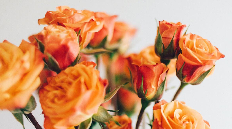 Магичните цветове на розата – 2 част
